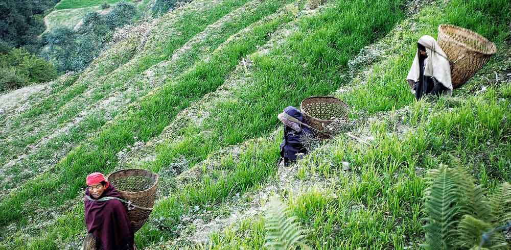 Locals in the rice fields of Nepal cheapest destinations