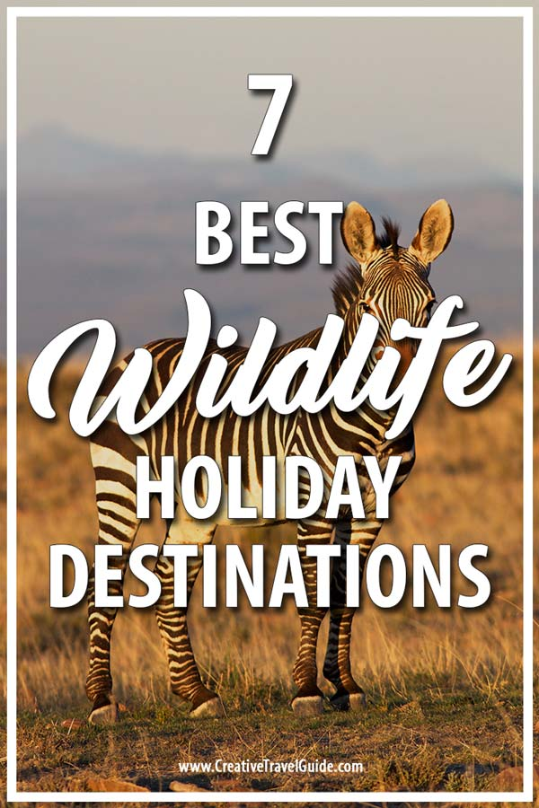 wildlife holiday