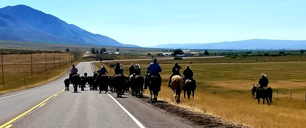Stay in an American Ranch Things to do in the US