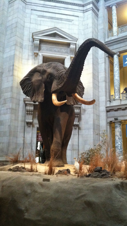 Smithsonian Museums in Washington DC things to do in the USA
