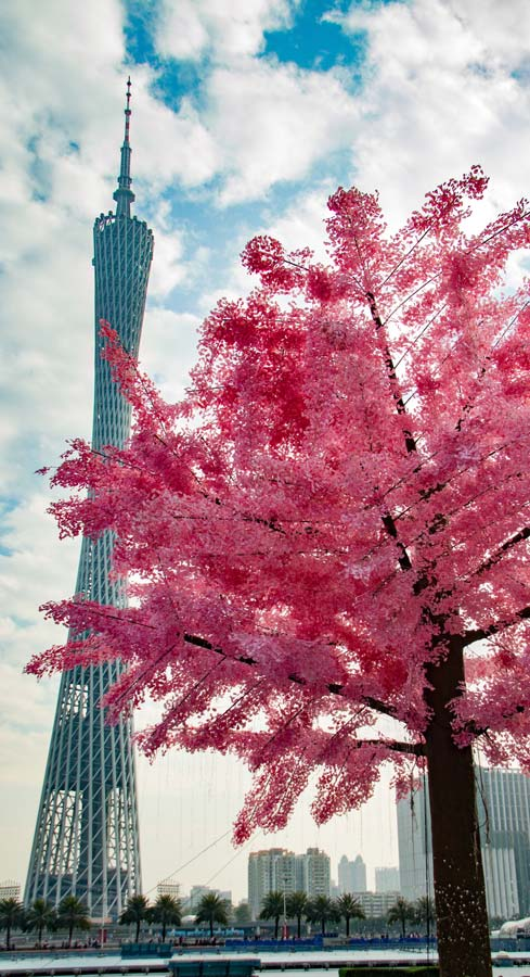 Canton Tower with Cherry Blossom Guangzhou Best places to visit in China