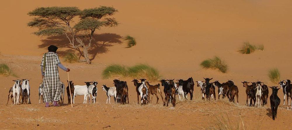 Mauritania Holiday