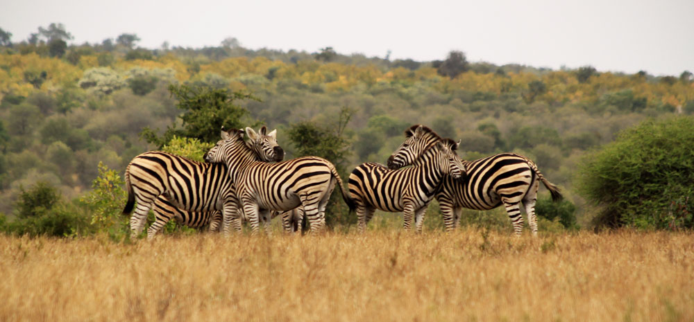 Kruger National Park Cities in South Africa