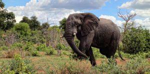 Best safaris in Zambia