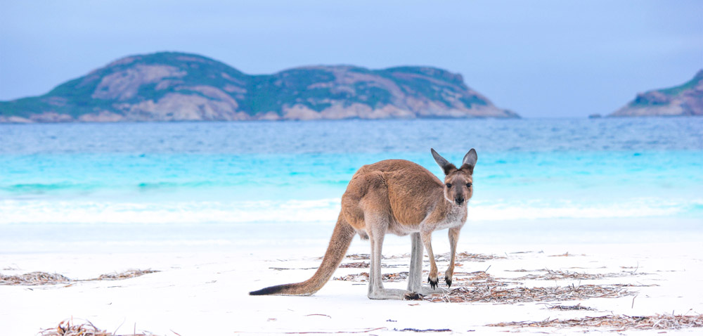 What to do in Australia