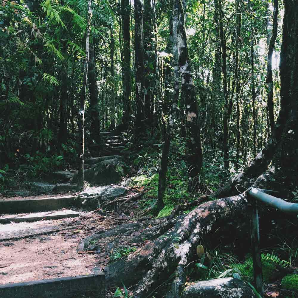 Daintree rainforest What to do in Australia