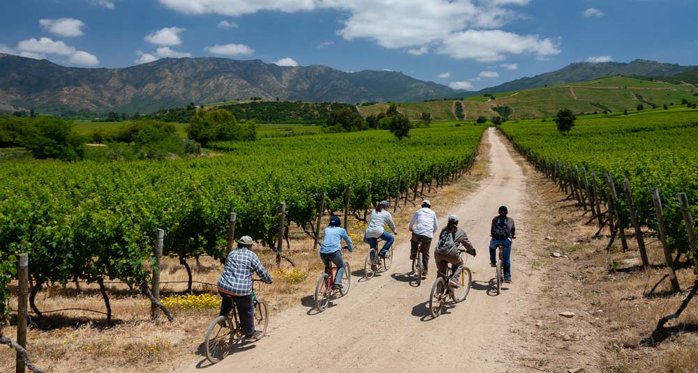 Chile wineries