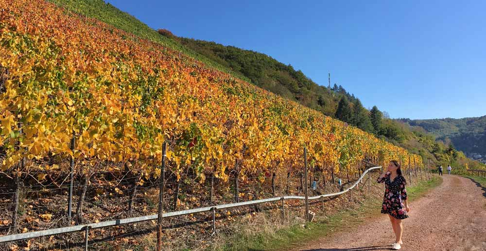 Walking through vineyards in Germany
