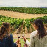 wine tasting at a vineyard