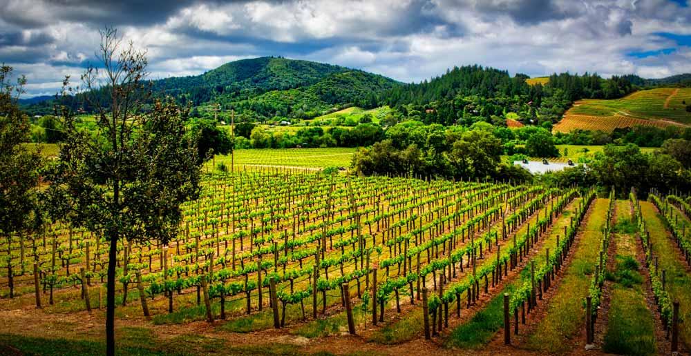 wine vineyard in the USA