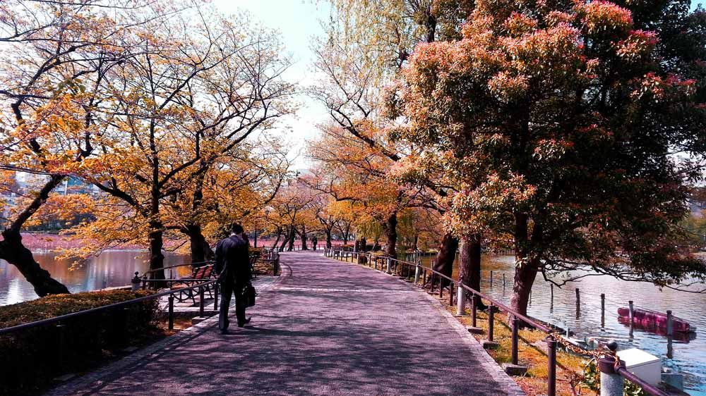 Parks in tokyo, free things to do in Tokyo, Japan